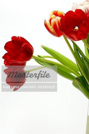 Gros plan des tulipes