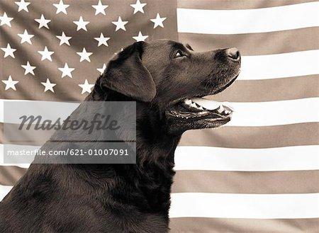 Patriotic Pooch