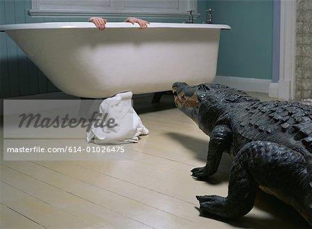 Crocodile in the bathroom