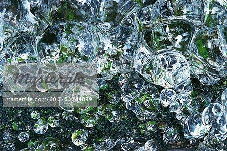 Moss congelés