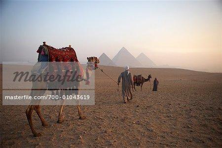 Hommes conduisant les chameaux dans le désert, les pyramides de Giza, Giza, Égypte
