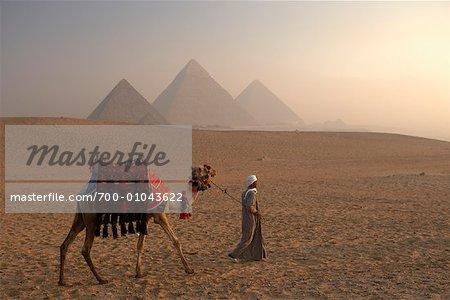 Man Leading Camel in the Desert, Giza Pyramids, Giza, Egypt