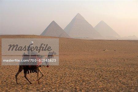 Rider à dos de chameau dans le désert, les pyramides de Giza, Giza, Égypte