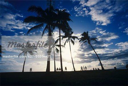 Silhouette of palm trees, Hawaii, USA