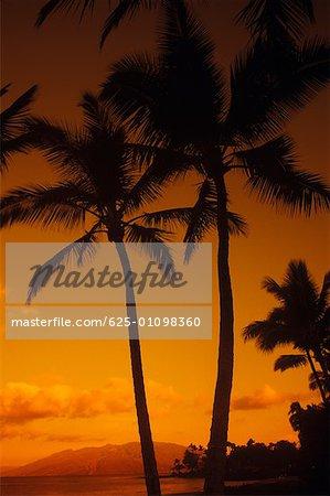 Silhouette of palm trees on the beach, Hawaii, USA