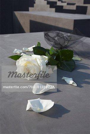 Eine weiße Rose am Mahnmal für die ermordeten Juden Europas, Berlin, Deutschland