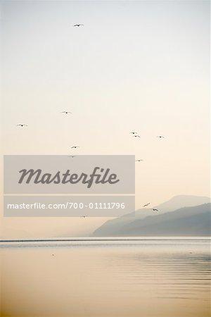 Seagulls, Loch Ness, Scotland