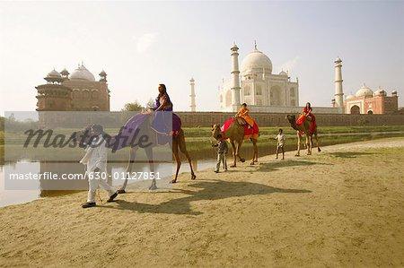 Tourist riding camels, Taj Mahal, Agra, Uttar Pradesh, India