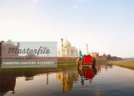 Young man standing on an elephant Taj Mahal, Agra, Uttar Pradesh, India