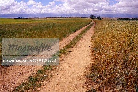 Chemin de ferme près de Piketberg, Province du Cap, Afrique du Sud
