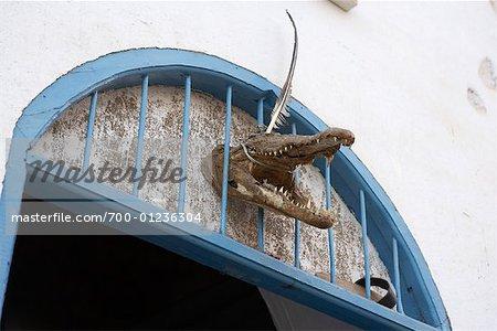 Crocodile Head, Aswan, Egypt