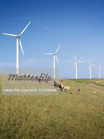 Parc éolien, Flevoland, Pays-Bas