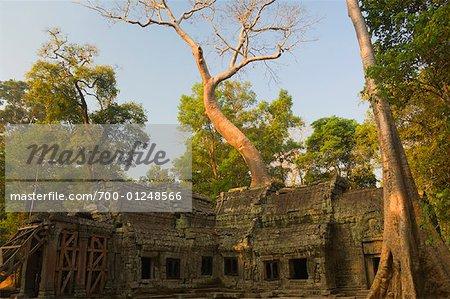 Ta Prohm Temple, Siem Reap, Cambodge
