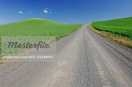 Gravel Road through Wheat Fields, Near Colfax, Palouse Region, Whitman Country, USA