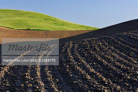 Champ labouré près de Colfax, région Palouse, Whitman County, Washington, Etats-Unis