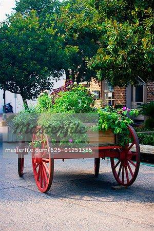 Potted plants on a cart, Savannah Georgia, USA