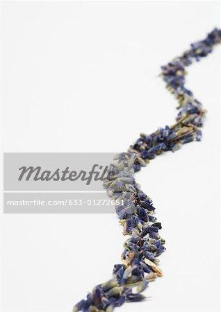 Dried lavender arranged in curvy line