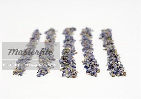 Rangées de fleurs de lavande séchées
