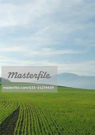 Field of crops, Switzerland