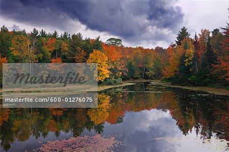 Lac de la forêt en automne, Ontario, Canada