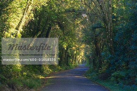 Road, Egmont National Park, North Island, Nouvelle-Zélande