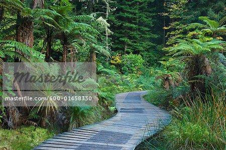 Boardwalk, forêt de Whakarewarewa, Rotorua, North Island, Nouvelle-Zélande