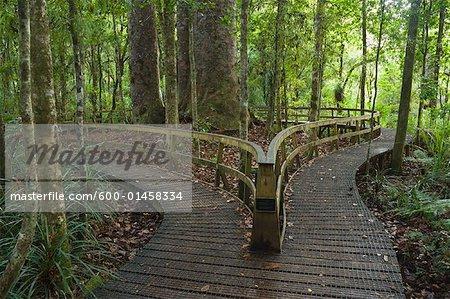 La forêt de Waipoua Kauri, promenade, North Island, Nouvelle-Zélande