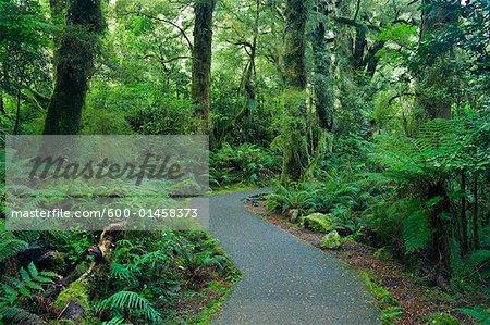 Chemin d'accès, Westland Sud, South Island, Nouvelle-Zélande