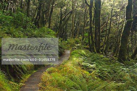 Forêt tropicale, Lewis Pass, South Island, Nouvelle-Zélande