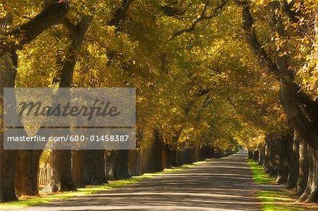 Rue bordée d'arbres, Hastings, North Island, Nouvelle-Zélande