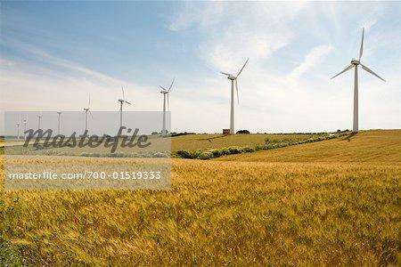 Windkraftanlagen im Maisfeld