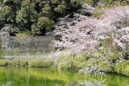 Lac de l'île de Kyushu, Beppu, Japon