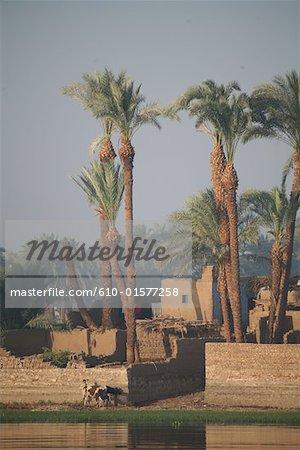 Égypte, entre Qina et village le long du Nil, Louxor