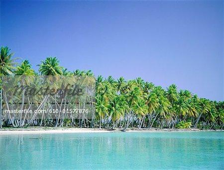 French Polynesia, Tuamotus archipelago, Takapoto, palm trees and lagoon