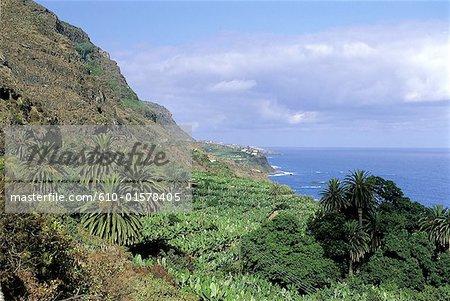 Spain, Canary Islands, Tenerife, between Puerto de la Cruz and Garachico, banana grove