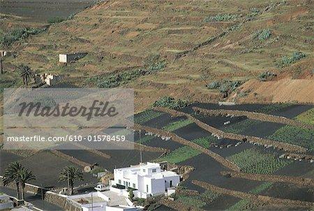 Espagne, Iles Canaries, Lanzarote, culture de terrasse