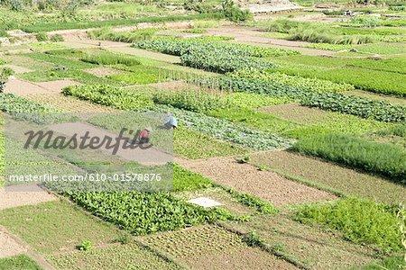 Chine, Yunnan, Xishuangbanna, près de Damenglong, cultive des champs