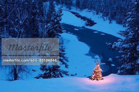 Weihnachtsbaum im freien