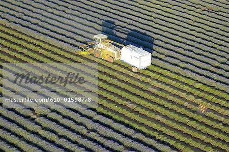 Culture de France, Provence, Plateau de Valensole, lavande, vue aérienne