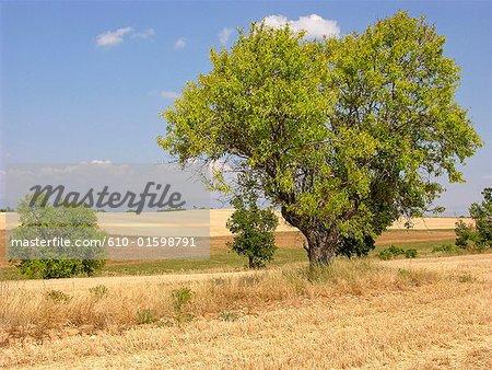 France, le paysage de Provence, Plateau de Valensole, Canada