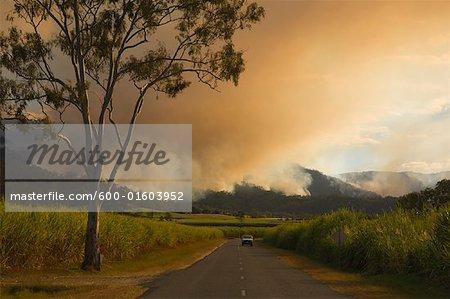 Feu de brousse, Finch Hatton, Pioneer Valley, Queensland, Australie
