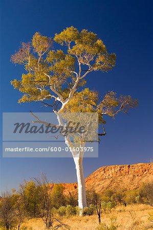 Ghost Gum Tree et des West MacDonnell Ranges, West MacDonnell National Park, territoire du Nord, Australie