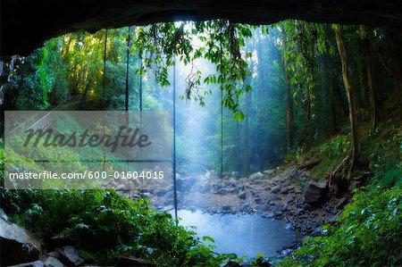 Cristal douche Falls, Parc National de Dorrigo, New South Wales, Australie