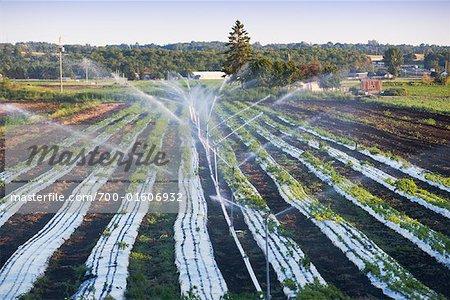 Irrigation des terres agricoles