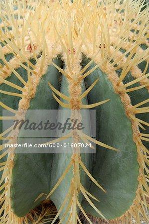 Aiguilles de cactus