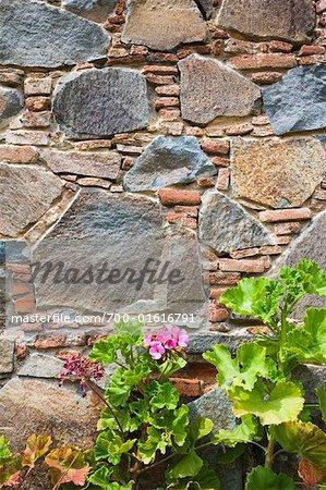 Geranium in Front of Stone Wall, Fikardou Village, Cyprus