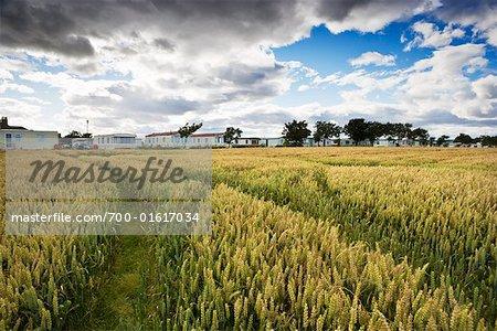 Terrain de caravaning et champ de blé