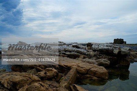 Bird Island, Lamberts Bay, South Africa