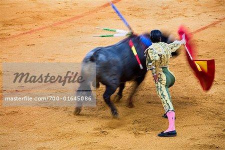 Matador and Bull in Bullfighting Ring, Andalucia, Sevilla, Spain