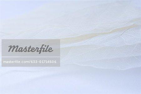 Feuilles séchées pâles empilés les uns sur les autres, très gros plan